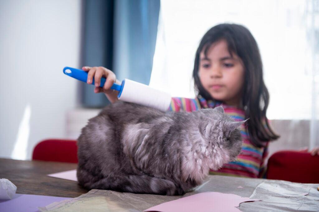 Tierhaare entfernen Katzenhaare