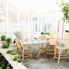 Einige Pflanzen brauchen im Winterquartier strenge Ruhe