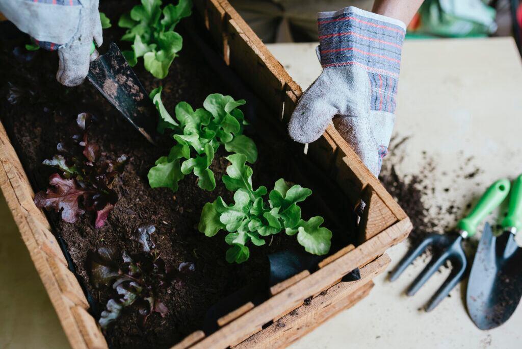 Urban Gardening zu Hause oder im Garten