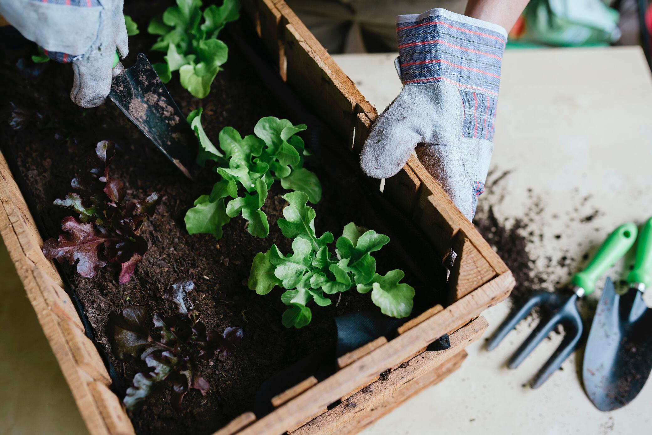 Im Winter mit Frühbeetkästen Gemüse aufziehen