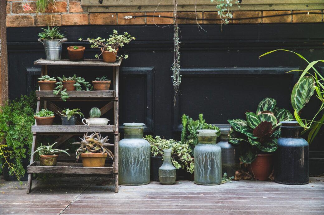 Die aktuellen Gardening-Trends für Zimmerpflanzen und Gartenpflanzen