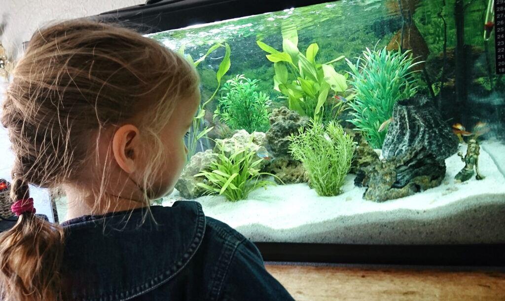 Aquarium einrichten Bodengrund