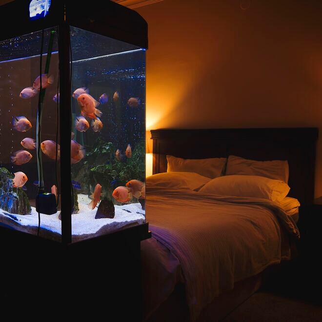 Alternative zum Fernseher: Ein Aquarium im Schlafzimmer. Aber bis es so schön aussieht, ist ein bisschen Zeit und Geduld nötig.