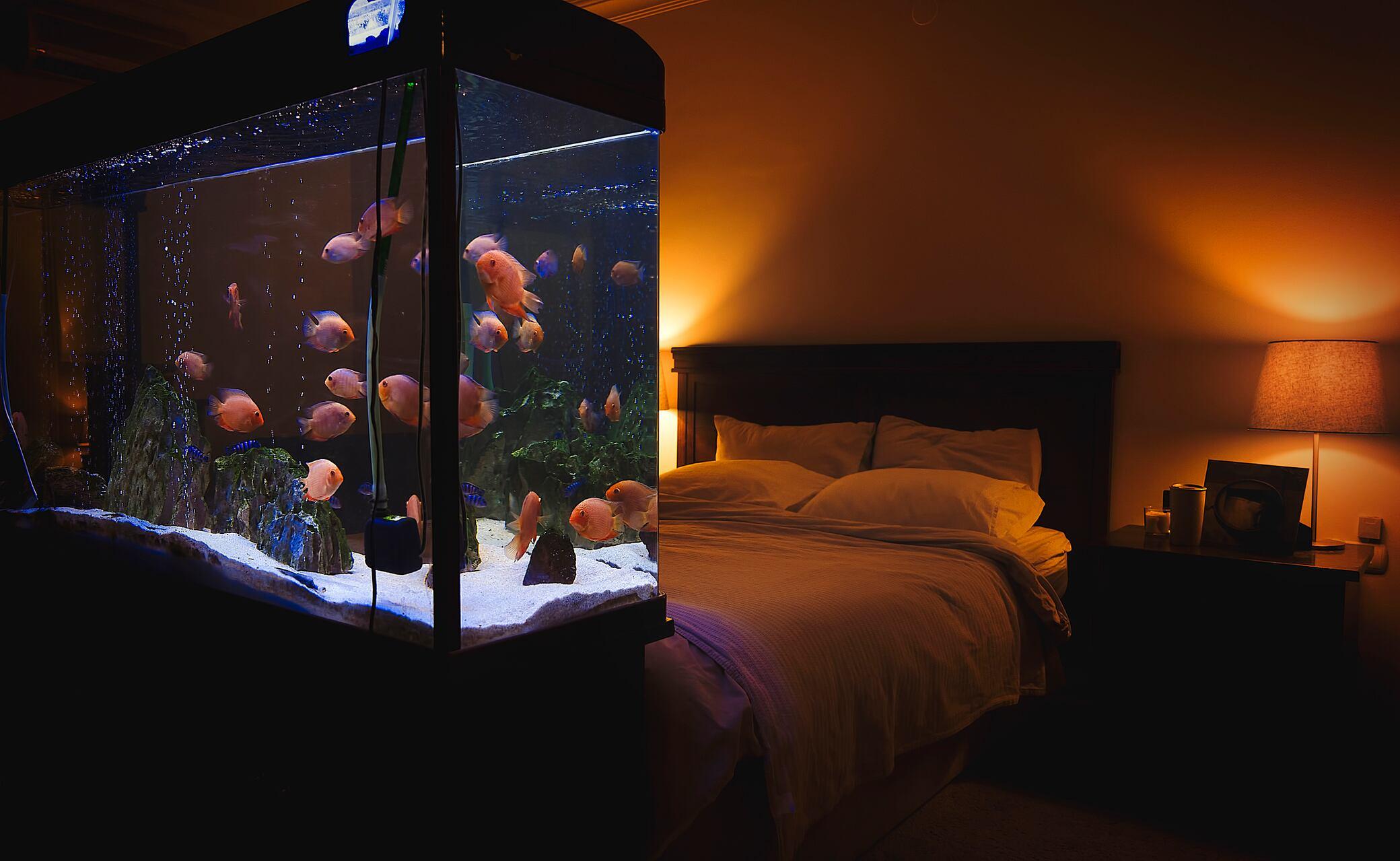 Schritt für Schritt ein Aquarium einrichten