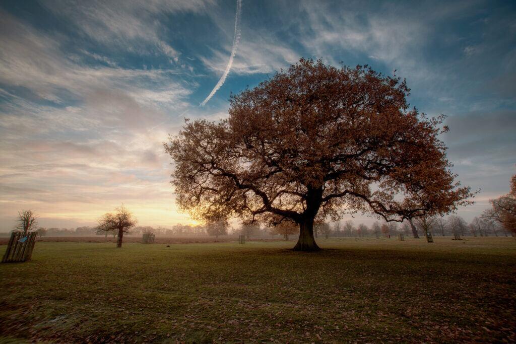 Als Lebensbaum steht die Eiche für kreative Stärke