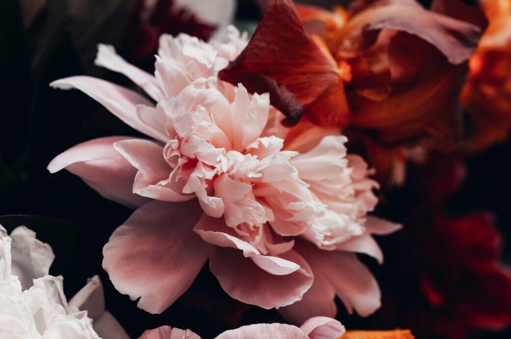 Wann Blühen Die Fichten Wieder
