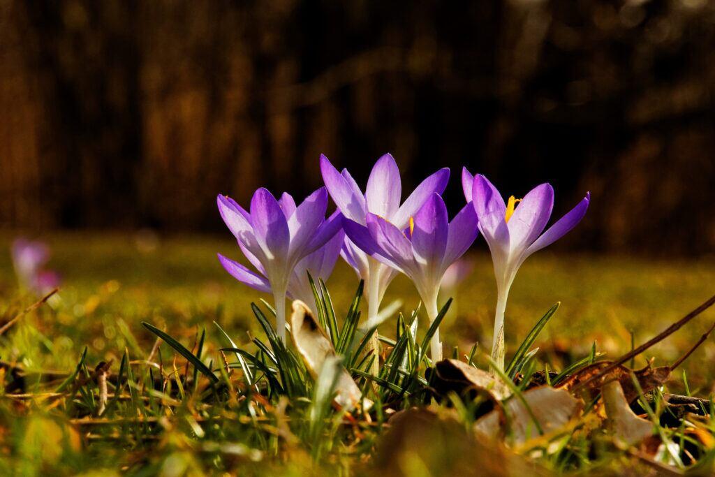 Was im März im Garten zu tun ist