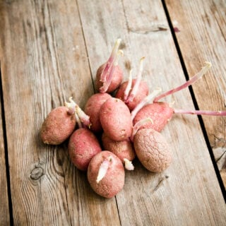 Kartoffeln vorziehen, um die Ernte zu verbessern