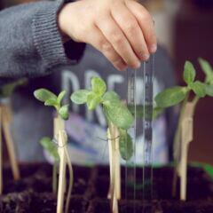 Mit dem richtigen Pflanzsystem kann man auch in Haus oder Wohnung gärtnern