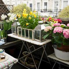 Ab wann kann man Balkonkästen wieder bepflanzen?