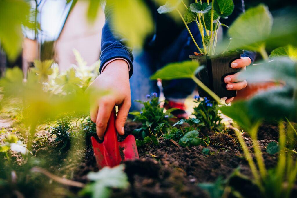 Behalte den Überblick im Garten – mit einem Anbauplan!