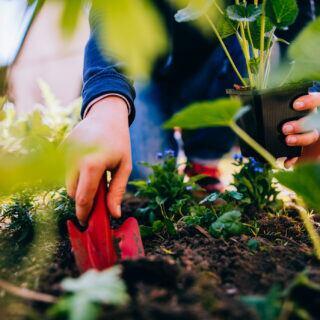 Anbauplan: Eine Frau pflanzt mit einer kleinen Gartenschaufel eine Pflanze ins Gemüsebeet