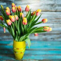 Tipps, mit denen Tulpensträuße länger frisch bleiben