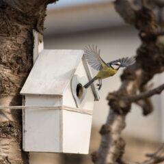 Bereits im Februar freuen sich Vögel über Nistkästen im Garten