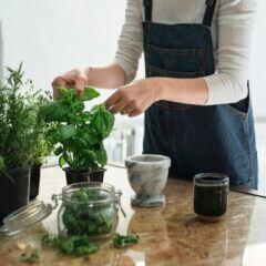 Kräuter aus dem Balkonkasten können in den Garten gesetzt werden – zum richtigen Zeitpunkt
