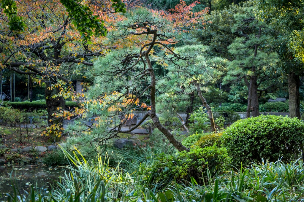 Neben der Tanne ist auch die Kiefer ein Lebensbaum mit Nadeln