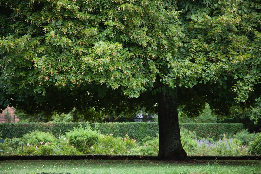Im Baumkreis der Linde steht im Mittelpunkt die Harmonie