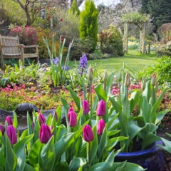 Sechs Trends für das Gartenjahr: Ein Garten mit Blumen
