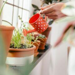 Das Gießen von Pflanzen kann mit einer DHDL-Erfindung überflüssig werden