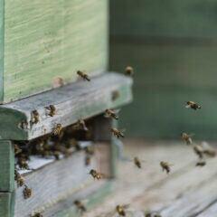 Kann man sich Bienen auf dem Balkon halten – was muss man tun?