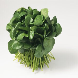 Ein Strauch Brunnenkresse mit grünen, fleischigen Blättern