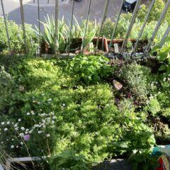 Wie legt man einen Rasen auf dem Balkon an?