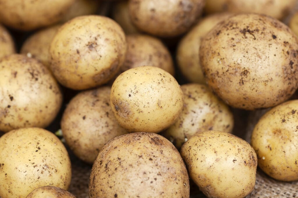 Wer eine Apokalypse überleben will, sollte Kartoffel anpflanzen