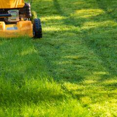 Für einen gepflegten Rasen sollte man ein paar wichtige Hinweise beachten