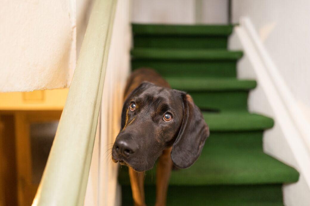 Ein Hund steht im Treppenhaus