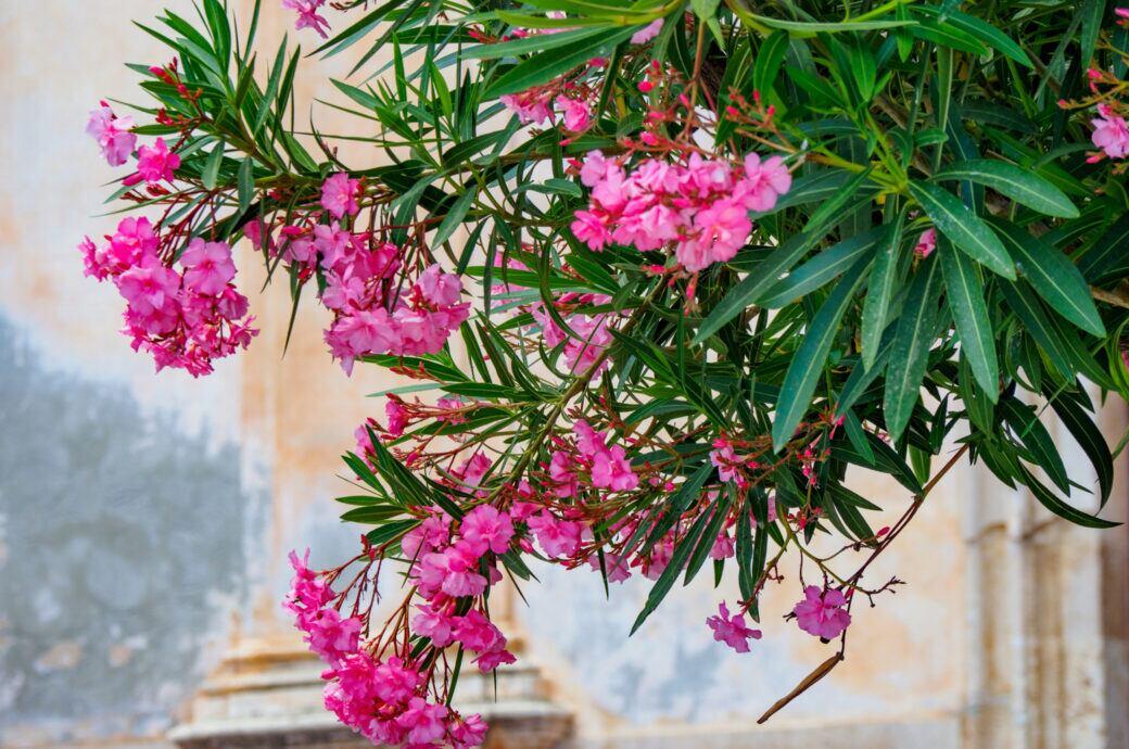 Mit den richtigen Pflanzen kann man sich das Urlaubsflair auch auf den Balkon holen