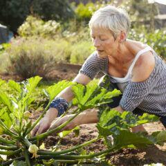 Bei der Gartenarbeit nehmen wir oft eine gebückte Haltung ein – und belasten damit den Rücken