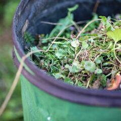 Unkraut lässt sich meistens noch in der Biotonne entsorgen, bei größeren Mengen an Gartenabfällen sollte man auf andere Möglichkeiten ausweichen