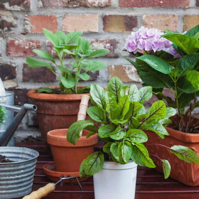 3 Tipps, damit Balkone üppig grün werden und Balkonpflanzen gesund wachsen