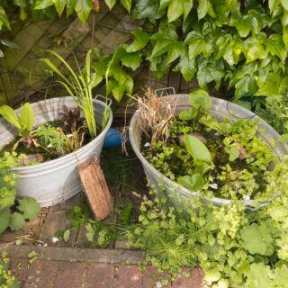 Eine Zinkwanne bietet sich gut als Behälter für einen Mini-Teich im Garten oder der Terrasse an