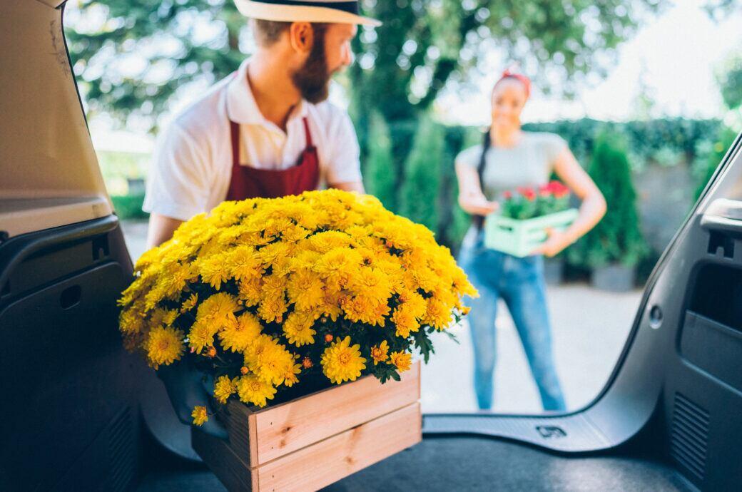 Worauf man achten muss, wenn man Pflanzen online kaufen möchte