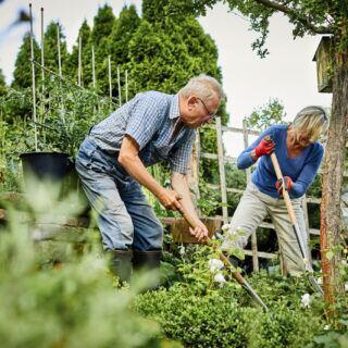 Tipps für einen klimaresistenten Garten