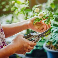 Nicht alle Gartenscheren sind auch sicher