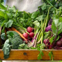 Gewisse Gemüsearten lassen sich selbst für Anfänger leicht anbauen.