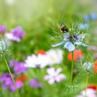 Eine Biene sitzt auf Wiesenblumen mit Blüten