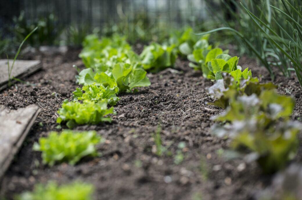 Gemüsebeet im Garten anlegen