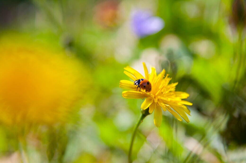 Fünf Pflanzen verraten, was der Rasen im Garten braucht