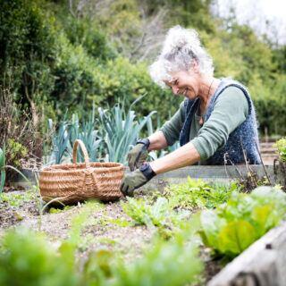 Schlüssellochgarten anlegen und pflegen – Tipps