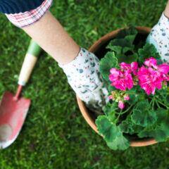 Wachstum und Blüte von Pflanzen kann durch Xylit-Erde gezielt gefördert werden