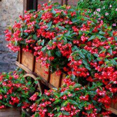 5 Pflanzen für den Halbschatten im Garten