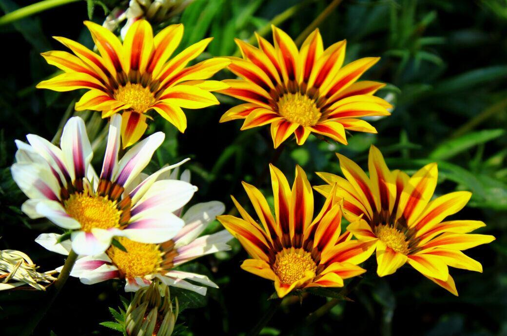 Pflanzen für sonnige Standorte auf dem Balkon und im Garten