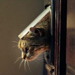 Darf man als Mieter eine Katzenklappe in der Tür einbauen?