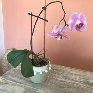 Blumentopf verschönern – DIY-Video-Anleitung