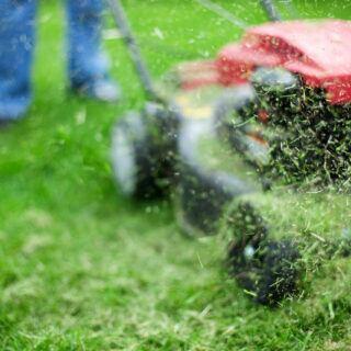 Darf man Rasenschnitt kompostieren?