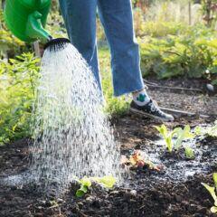 Wasser im Garten sparen – 5 Tipps