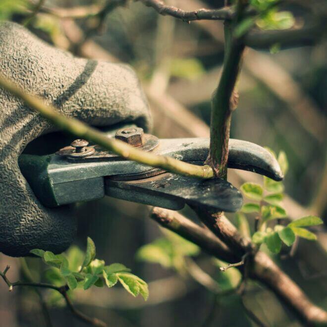 Rost von Gartenschere befreien – Trick mit Hausmittel